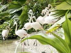 Tropical Islands Resort_Mobile Homes Bild 12