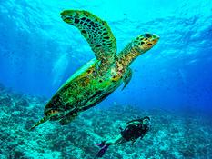 Dusit Thani Maldives Bild 12